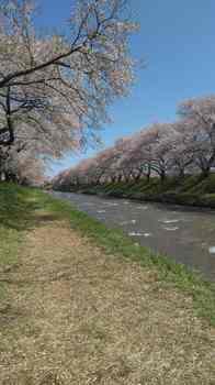 舟川沿い.jpg